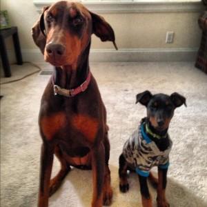 Juno + Dexter